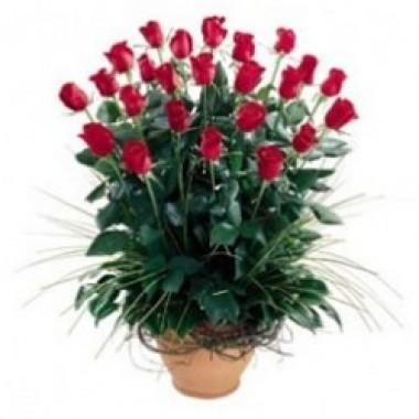 Arreglo de 50 rosas a Ecuador