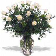 24 rosas en macetero