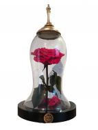 Rosa Eterna - Edición Especial