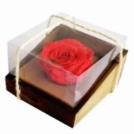 Sólo para Quito - Eternal Rose