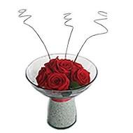 Rosas Eternas en Copa